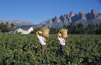 Vignobles en Afrique du Sud