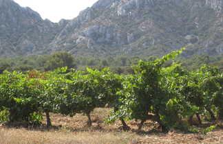 Vignobles provence
