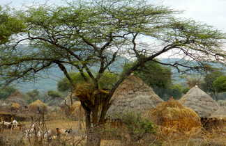 village typique éthiopien