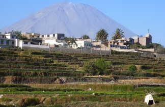 Volcan Misti en arrière plan et terrasse bien verte au premier plan