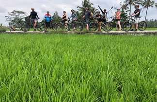 Groupe à Vélo dans les rizières, Bali, Indonésie