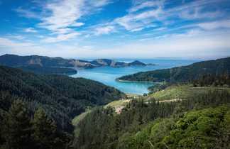 Vue sur la côte et la forêt à Picton