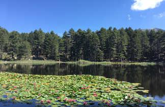 Vue sur un lac fleuri de nénuphars en Corse