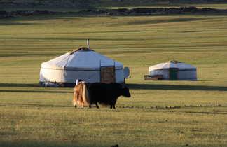 Mongolie yak yourte