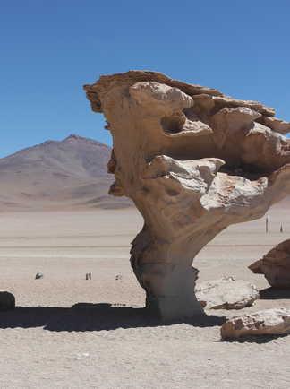 Arbre de pierre dans le sud Lipez