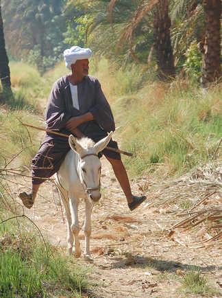 Balade à dos d'âne sur les rives du Nil