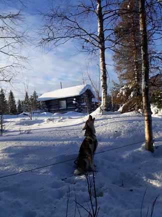 Cabane de trappeur, voyage en Finlande