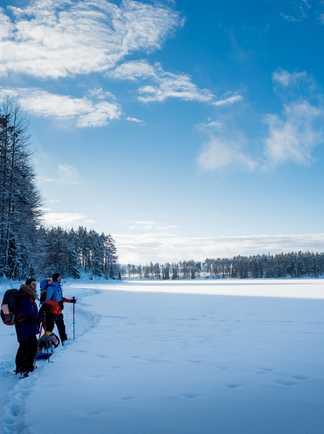 Randonnée en raquettes avec huskies en Finlande