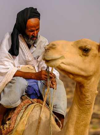 Chamelier portrait, Mauritanie