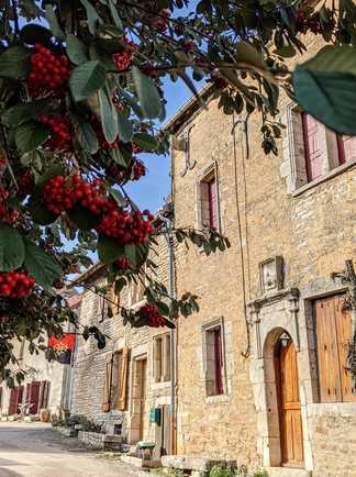 un arbre avec des fruits rouges en premier plan, la village de Châteauneuf en arrière plan
