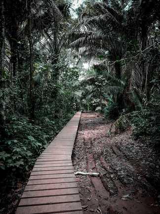 Chemin dans la Réserve National de Tambopata, proche de Puerto Maldonado au Pérou