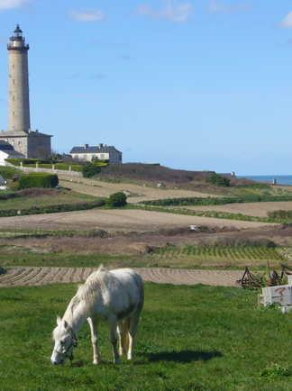 cheval blanc broutant de l'herbe dans les champs , phare au dernier plan