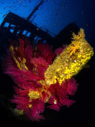 Concrétionnées de mille couleurs, les épaves de Méditerranée