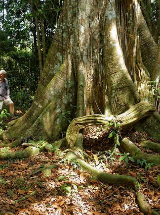 Contemplation dans la forêt amazonienne