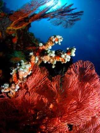 Décors multicolores des fonds sous-marins indonésiens