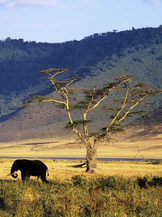 Éléphants lors d'un safari dans le cratère du Ngorongoro en Tanzanie