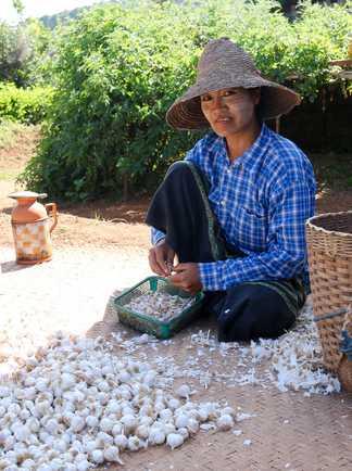 Femme birmane préparant l'ail