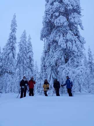 Groupe en raquettes, voyage en Laponie finlandaise