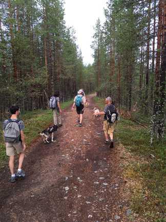 Groupe faisant de la  canirando en Finlande