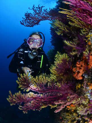 La plongée au milieu des gorgones de Méditerranée donne le sourire