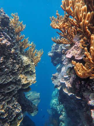 Les coraux sur l'ile de Menjangan