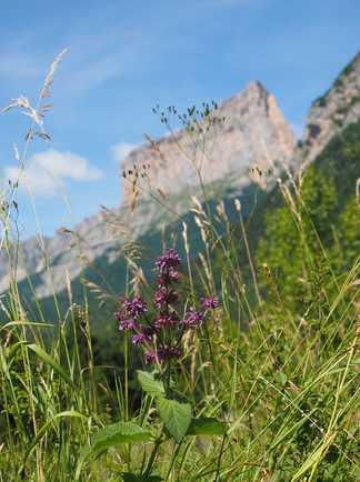 Mont Aiguille lors d'une randonnée dans le massif du Vercors