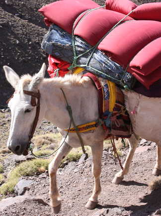 Mule Toubkal