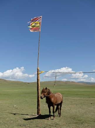 Orkhon, étalon du Naadam