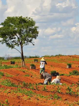 Paysans travaillant dans les champs à Bahia