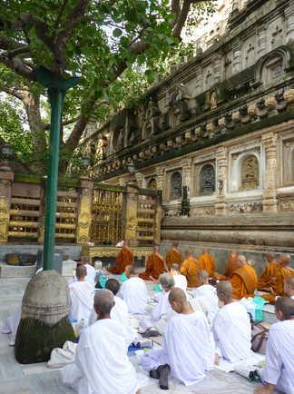 Pèlerins bouddhistes au pied de l'arbre de bouddha à Bodhgaya