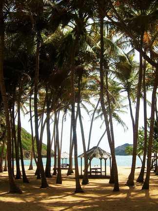 Plage paradisiaque du Sud de la Guadeloupe