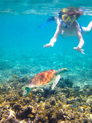 Plongeurs  croisant une tortue en Indonésie