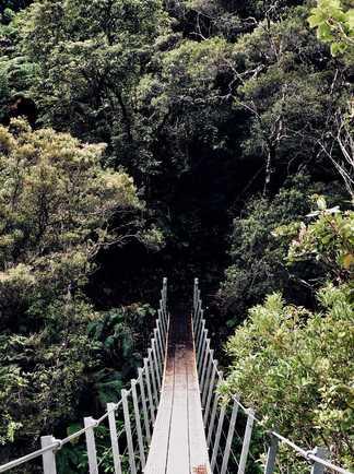 Pont suspendu aux alentours de Coromandel