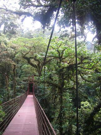 Pont suspendu forêt tropicale - Costa Rica