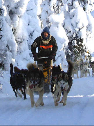 Traîneau à chiens, voyage en Laponie