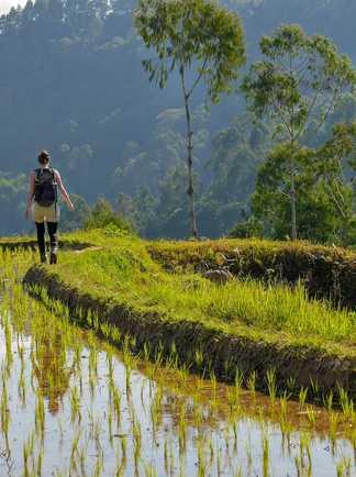 Rando au bord d'une rizière