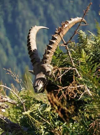 Rencontre avec la faune sauvage en randonnée