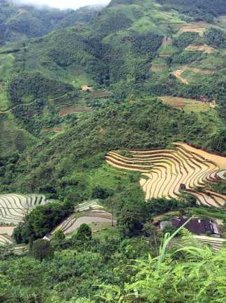 rizieres Vietnam