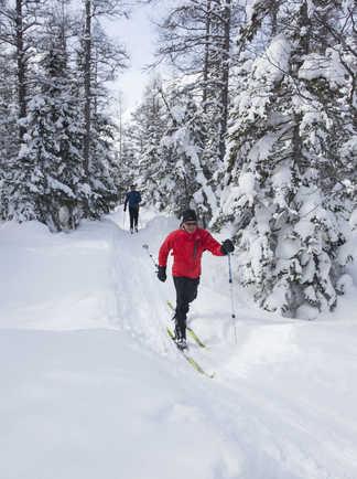 Ski de fond  dans les forêts enneigées du Québec