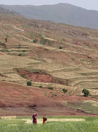 Vallée cultivée, Haut Atlas Central, Maroc