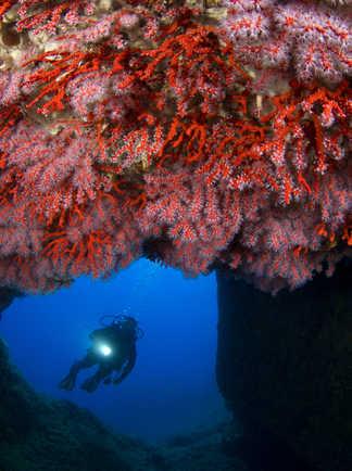 Voûte de corail rouge, l'or de la Méditerranée