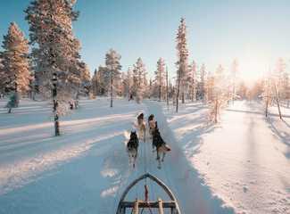 Chien de traineau pour vacances en Laponie en hiver