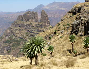Le parc national des montagnes du Simien