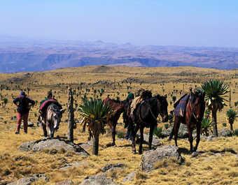 Parc national du Simien en Ethiopie