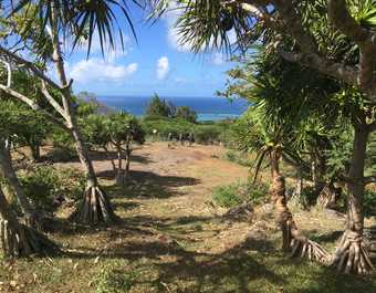 Point de vue sur la mer à Rodrigues