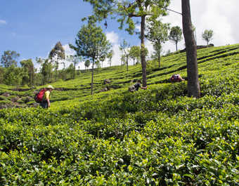 trek Sri Lanka, voyage aventure Sri Lanka, randonnées Sri Lanka