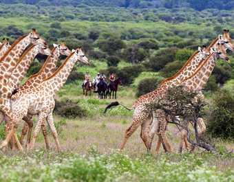 Safari à cheval dans le Mashatu