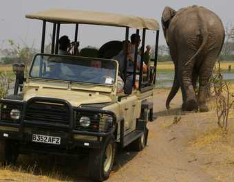 Safari en 4x4 dans le parc national de Moremi