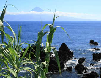 Volcan Pico aux Açores