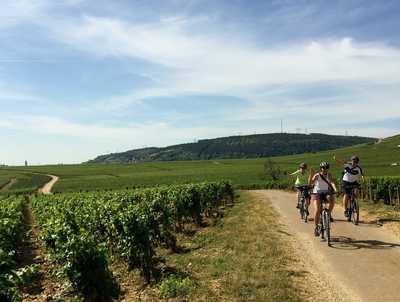 Un groupe de cyclistes sur un chemin entre les vignes en bourgogne sud
